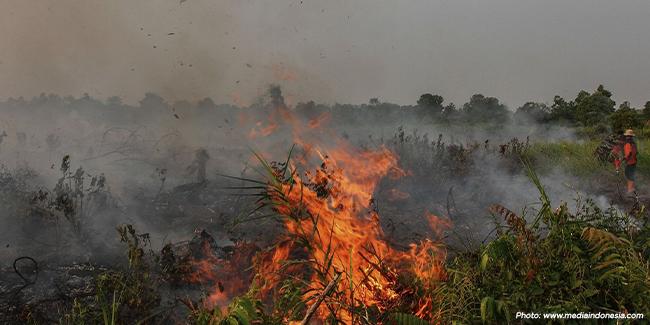 Kebakaran Hutan Kalimantan