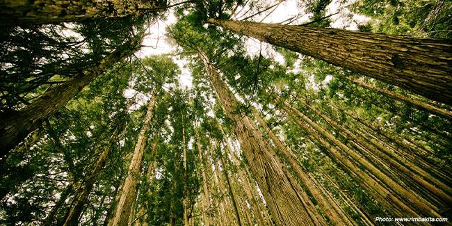 Hutan Kalimantan Selatan